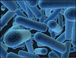 E.coli Water Contamination